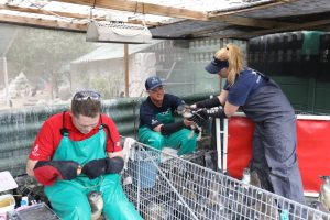 Penguin Trainers from Shedd, Georgia and Mystic Aquarium work together