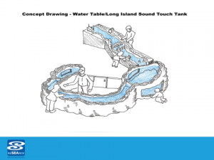 Concept Drawing for LI Sound Water Table Touch Tank