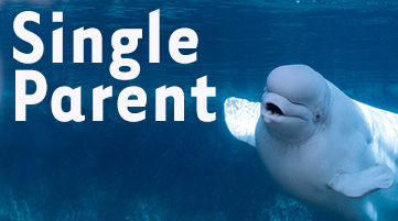 Single Parent Membershipl