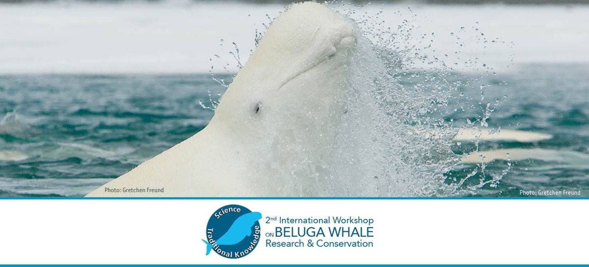 Traditional Knowledge Featured at Mystic Aquarium's Upcoming Beluga Conference