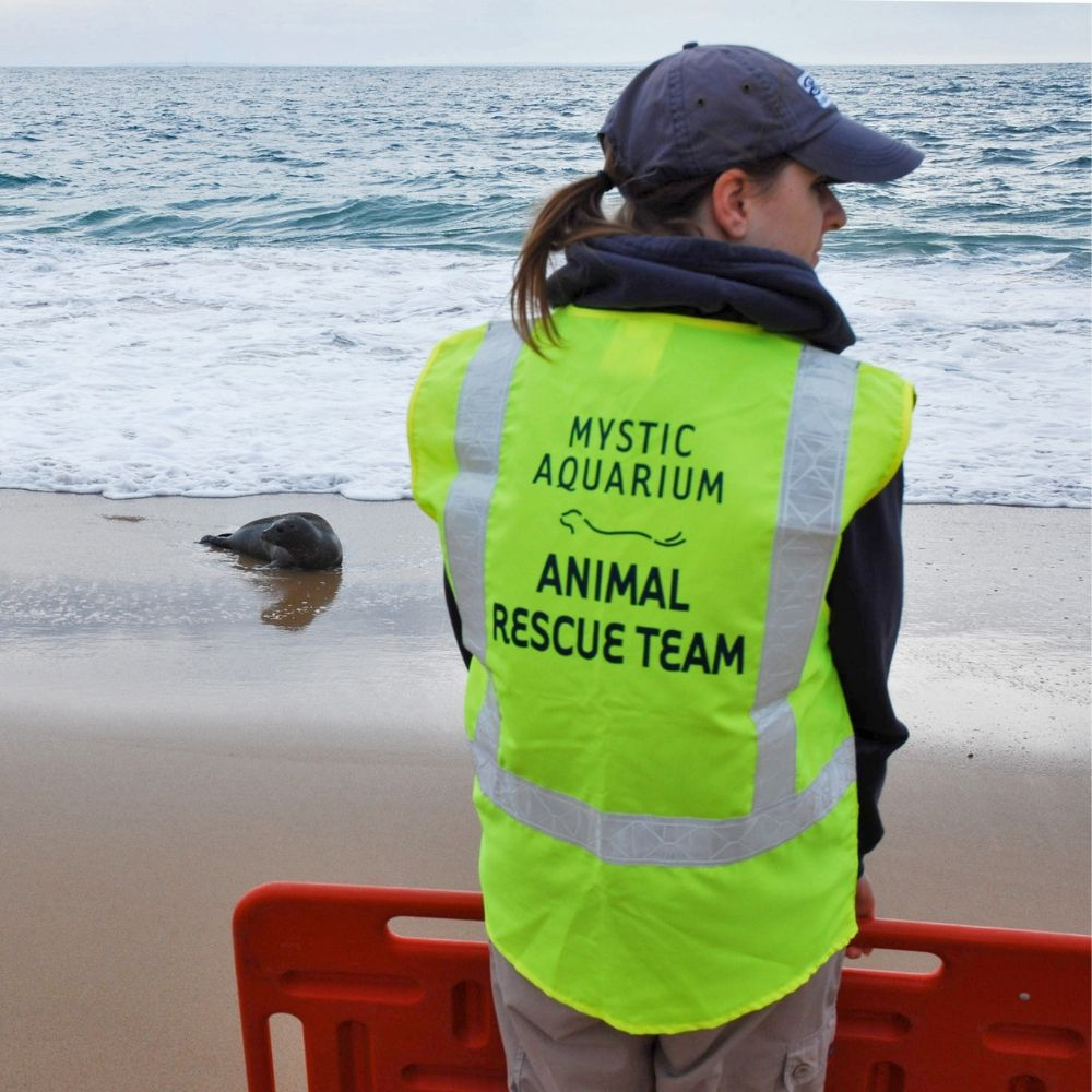 Animal Rescue Team Member