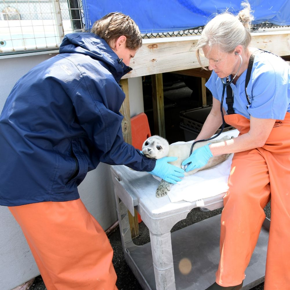 Veterinarians with seal