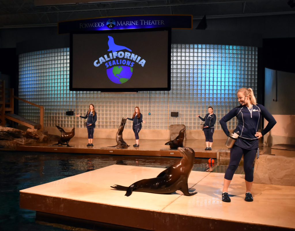 Marine Theater Trainers And Sea Lions