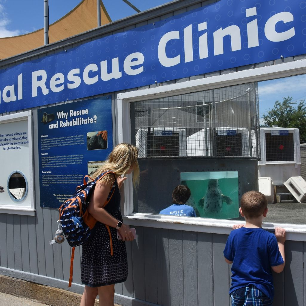 Animal Rescue Clinic