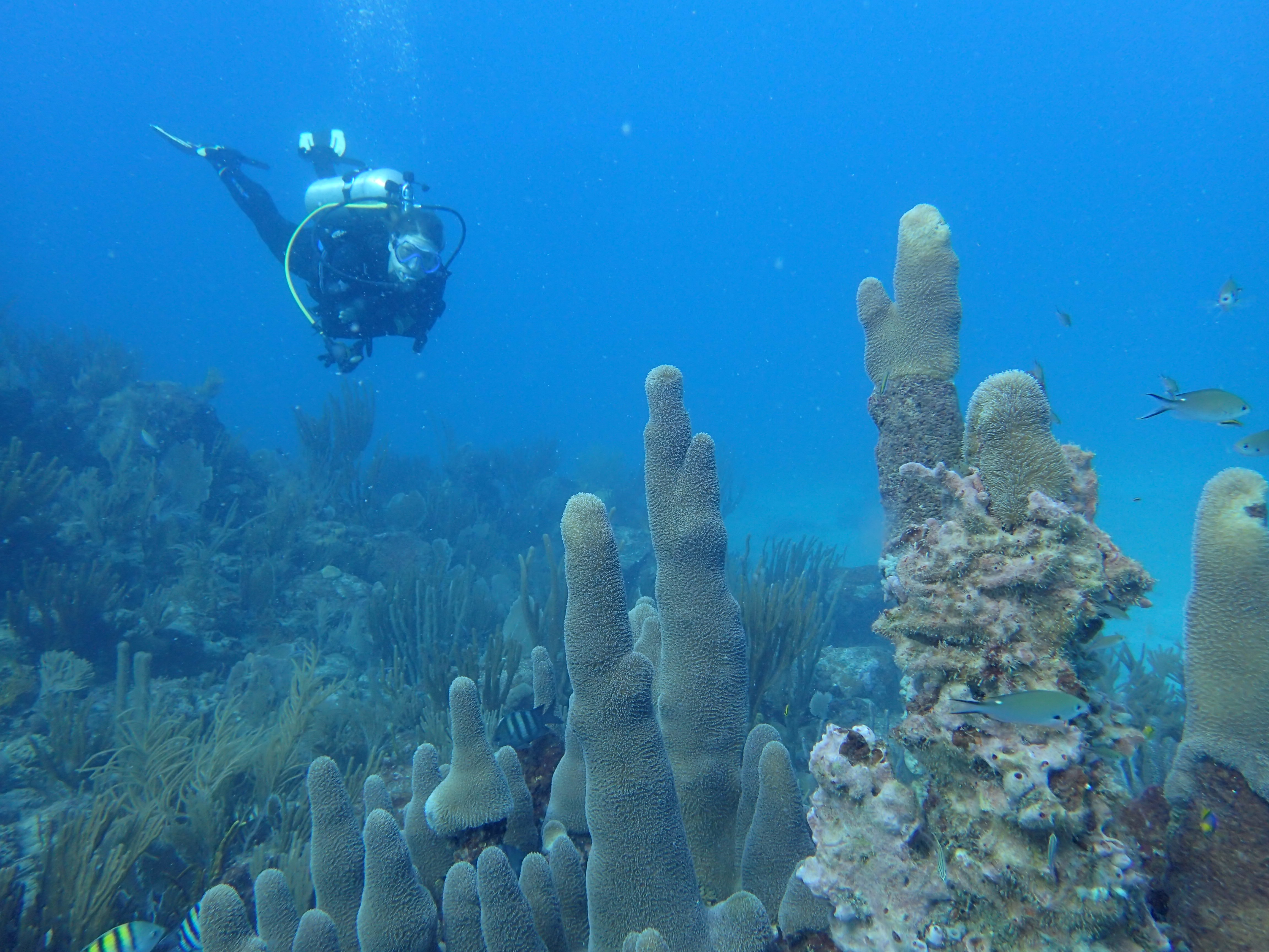Rapid Response Coral Reef Research: The New Norm for a Changing Climate?