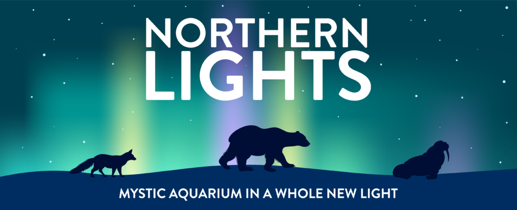Northern Lights Event Image