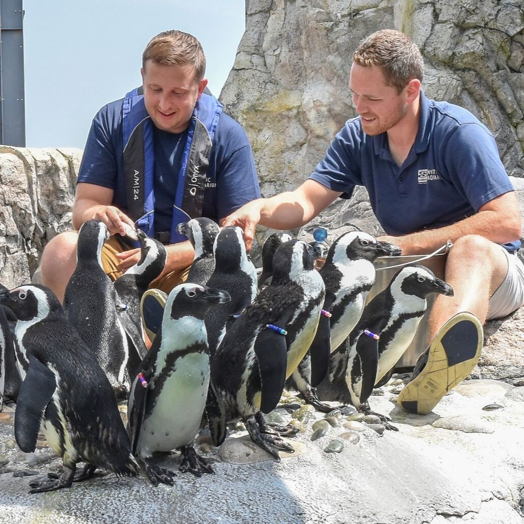 Trainer and guest with penguins