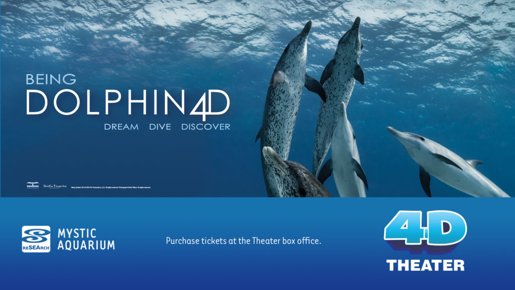 Being Dolphin Promo Image