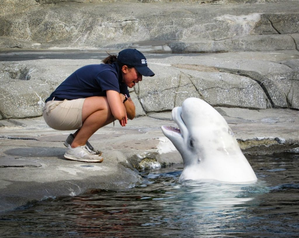 trainer with beluga