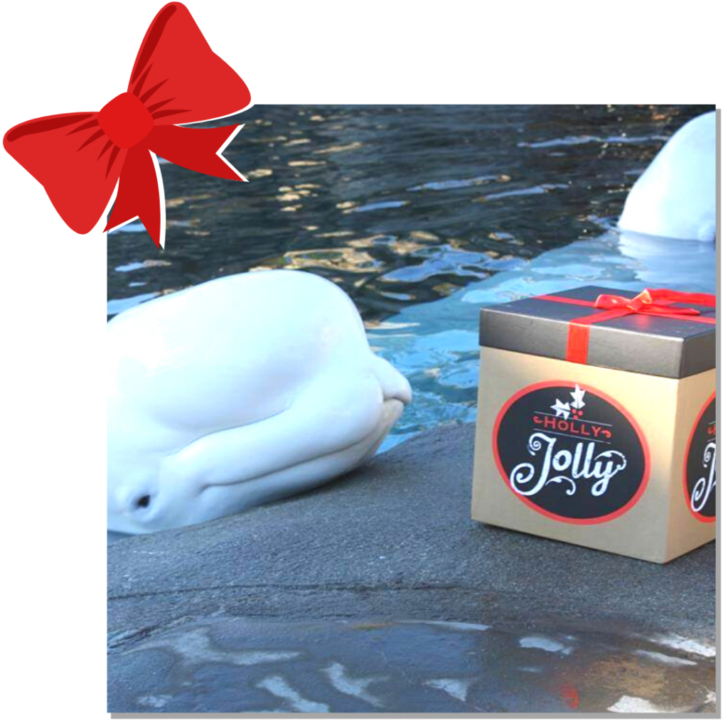 beluga with gift and bow