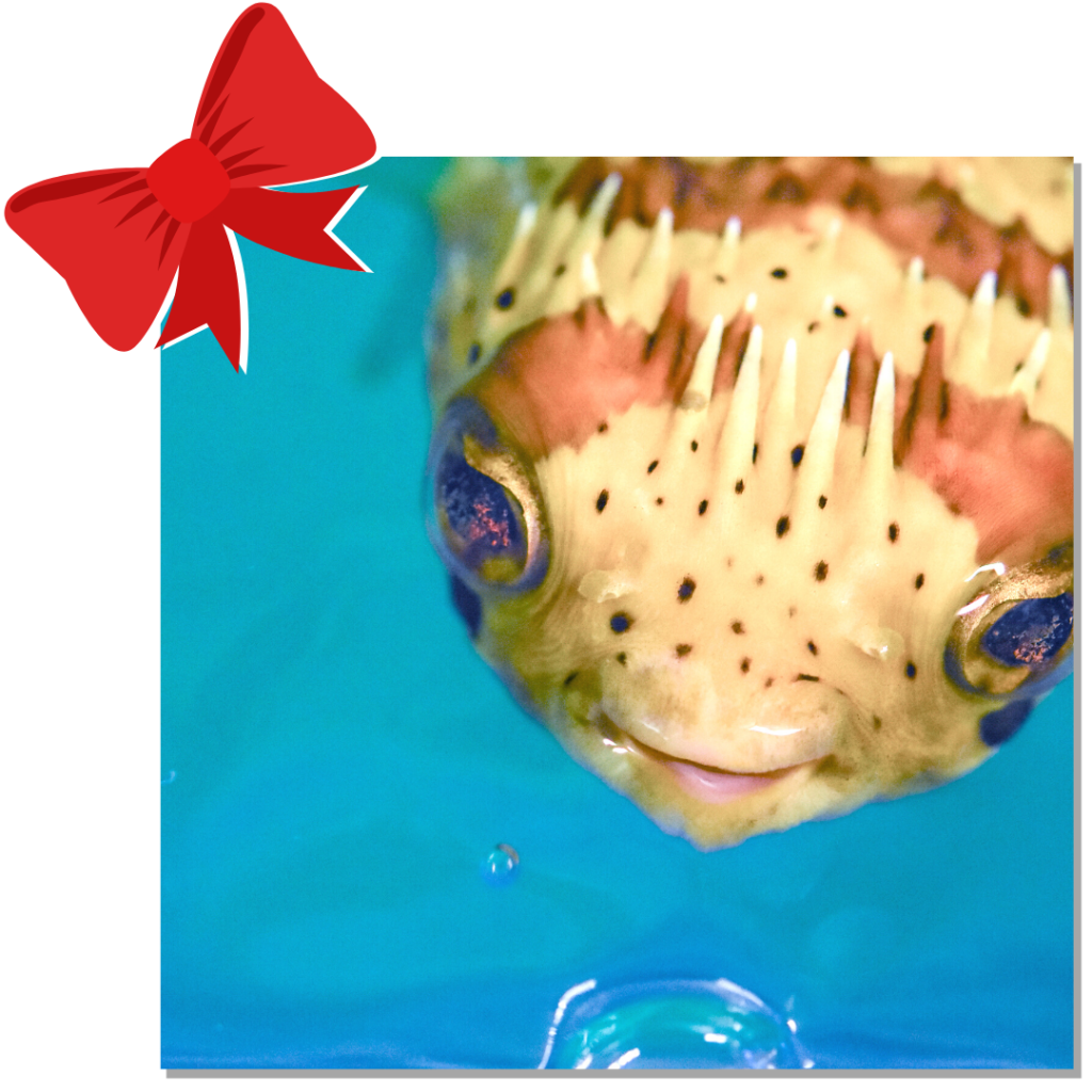 fish image with bow